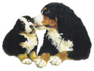 Southern Bernese Mountain Dog Club