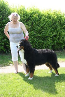 2013 Central Bernese Mountain Dog Club Open Show Best Puppy in Show June Miles Ardenbridge Big Bertha with Jaybiem