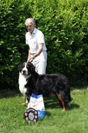 2013 Central Bernese Mountain Dog Club Open Show